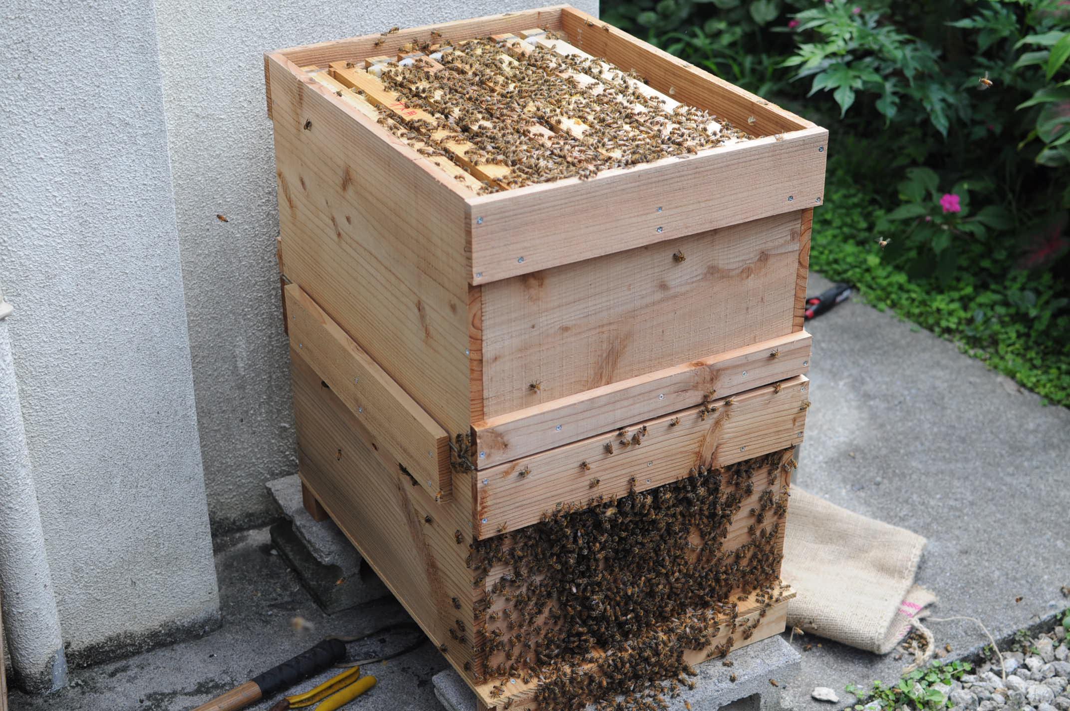 方 養蜂 始め